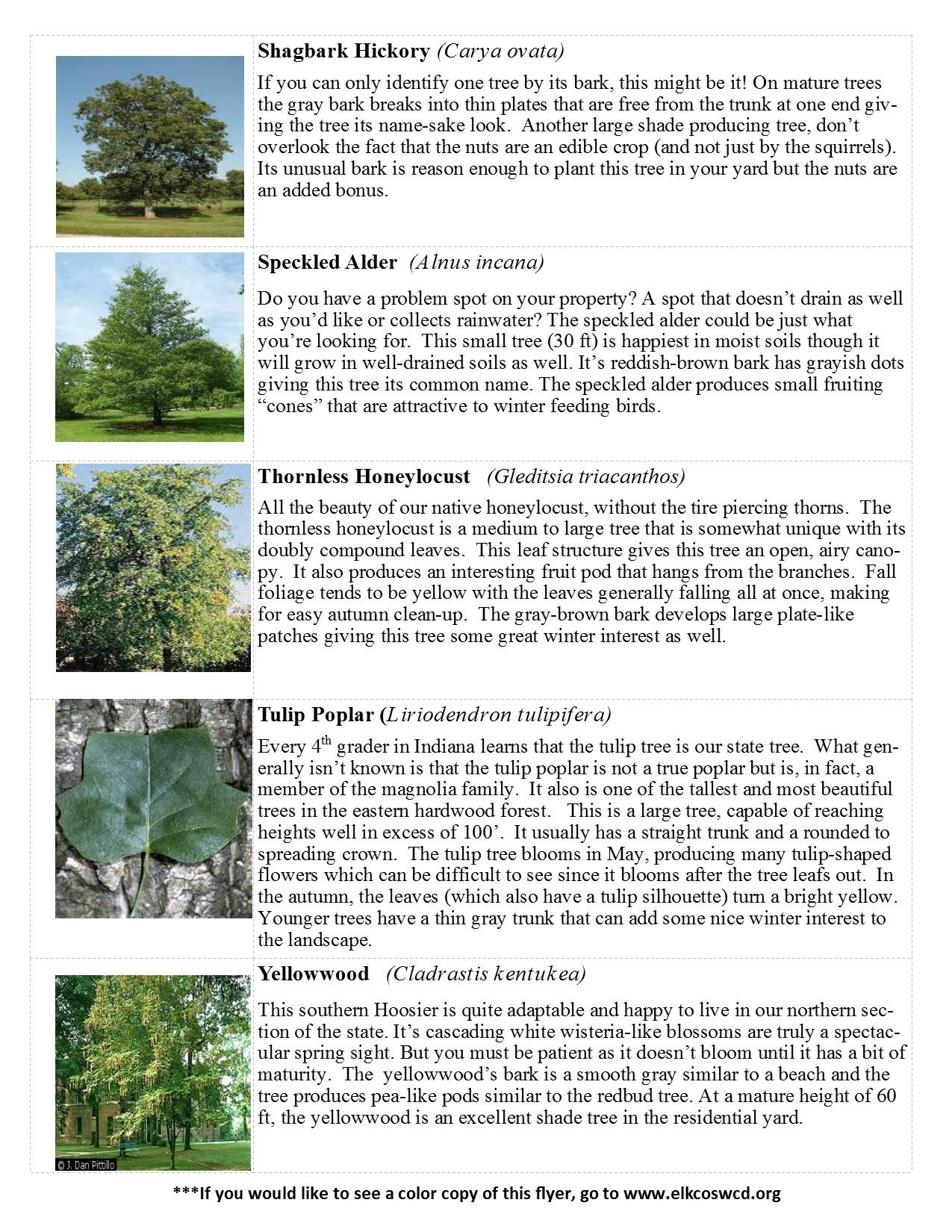 2017-tree-sale-species-list_3